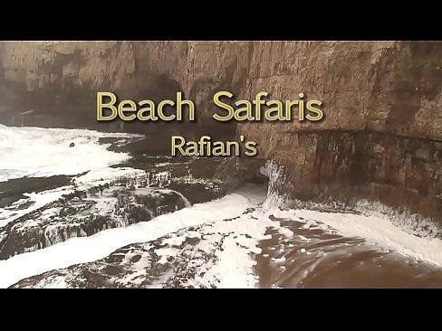 Beach Safaris 24